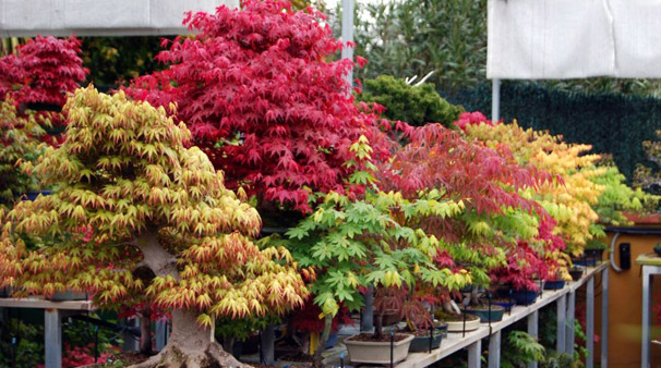 Cursos de Bonsai en Madrid: Bonsai Colmenar